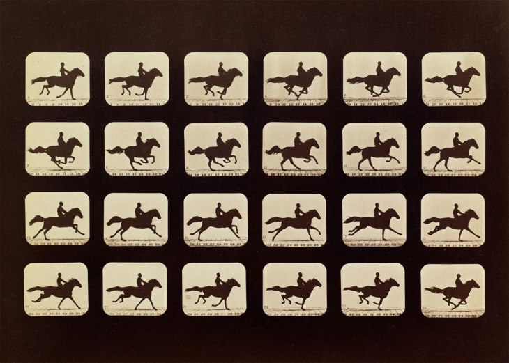 muybridge_05_horses_phryne-web