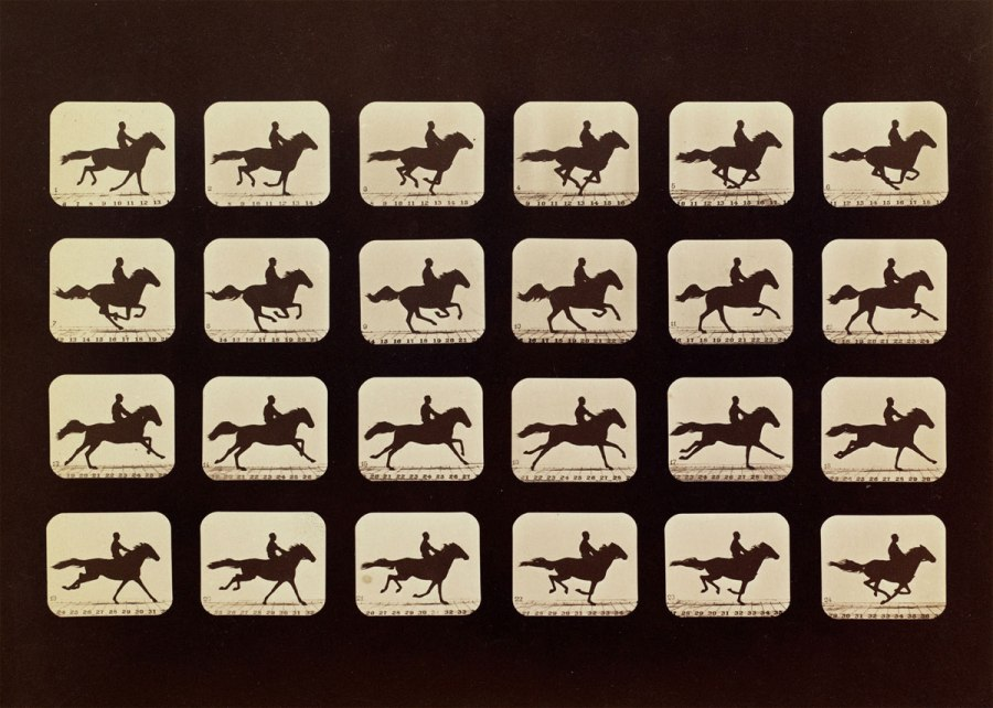 muybridge_05_horses_phryne-web